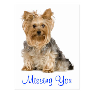 Missing You Yorkshire Terrier Puppy Dog Postcard