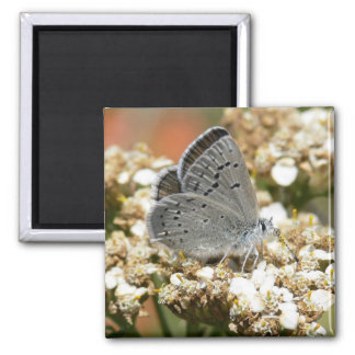 Mission Blue Butterfly Magnets