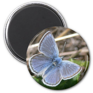 Mission Blue Male Butterfly 6 Cm Round Magnet