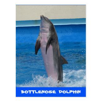 Mississippi Dolphin Postcard