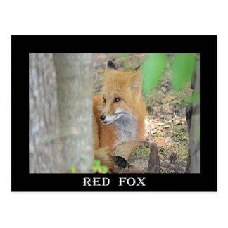 Mississippi Red Fox Postcard