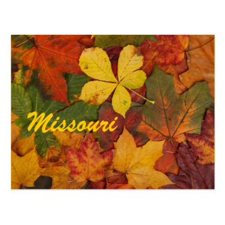 Missouri Autumn Leaves Postcard