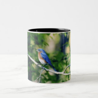 Missouri Blue Bird Two-Tone Coffee Mug