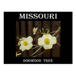 Missouri Dogwood Postcard