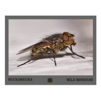 Missouri Fly. Postcard
