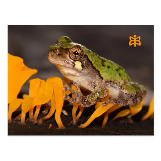Missouri Frog on Fungi. Postcard