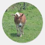 MIssouri Mule Round Stickers