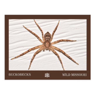 Missouri Spider. Postcard