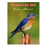 Missouri State Bird - Eastern Bluebird Postcard