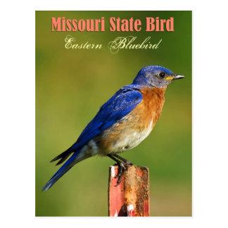 Missouri State Bird - Eastern Bluebird Post Cards