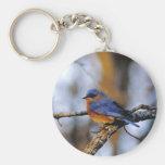 Missouris Bird key chain