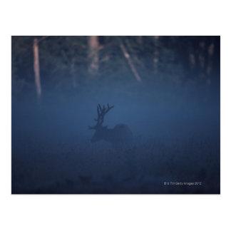 Mist around Elk in Forest Postcard