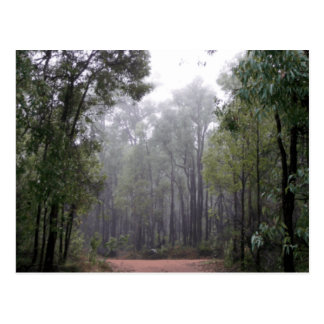 Mist & Eucalypts Post Card
