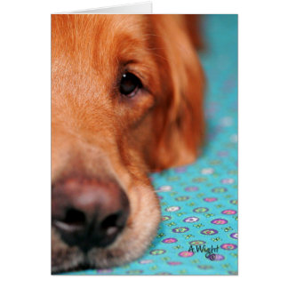 Mister Farley, the Golden Retriever Card