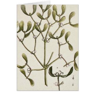 Mistletoe from 'A Curious Herbal', 1782 Card