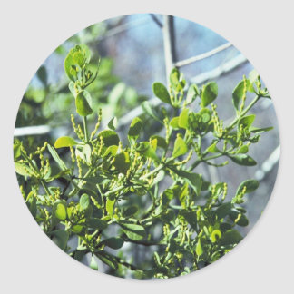 Mistletoe Round Sticker