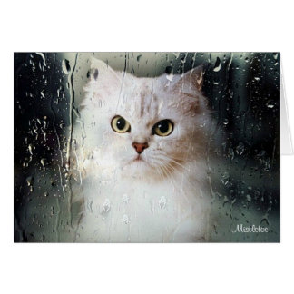 Mistletoe the Silver Persian Blank Greeting Card