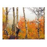 Misty Autumn Aspen