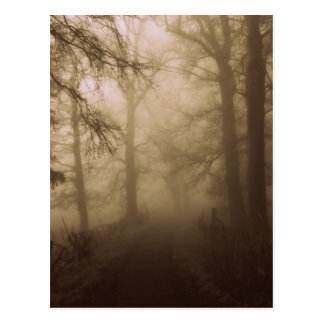 Misty Morning Walk in the Woods - Photograph Postcard