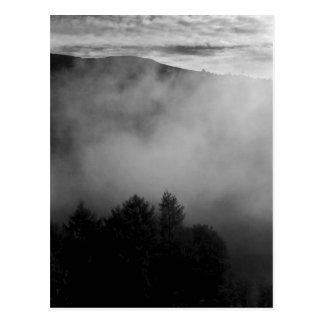 Misty Pines Postcard