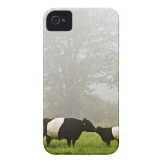 Misty scene of belted galloway cow mothering her iPhone 4 Case-Mate case