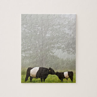 Misty scene of belted galloway cow mothering her jigsaw puzzle