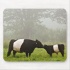 Misty scene of belted galloway cow mothering her mouse mat