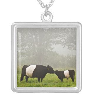 Misty scene of belted galloway cow mothering her silver plated necklace