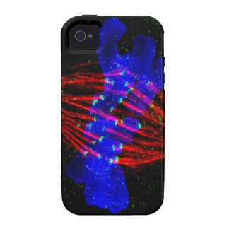 Mitotic Metaphase iPhone 4/4S Cases