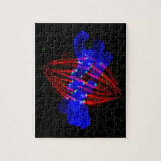 Mitotic Metaphase Jigsaw Puzzle