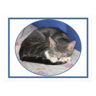 Mittens Kitten Nap Postcard