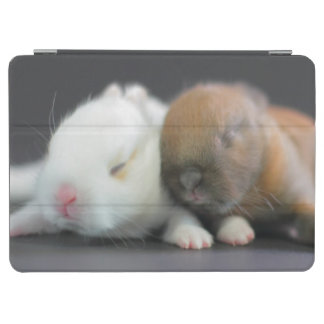 Mix breed of Netherland Dwarf Rabbits iPad Air Cover