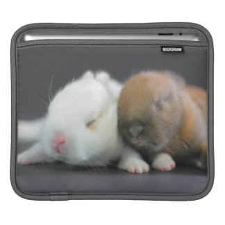 Mix breed of Netherland Dwarf Rabbits iPad Sleeves