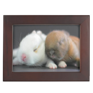 Mix breed of Netherland Dwarf Rabbits Keepsake Box