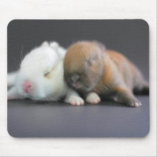 Mix breed of Netherland Dwarf Rabbits Mouse Mat