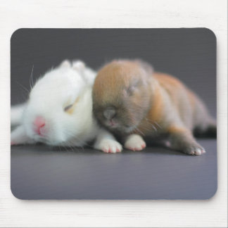 Mix breed of Netherland Dwarf Rabbits Mouse Pads