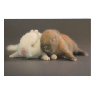 Mix breed of Netherland Dwarf Rabbits Wood Wall Art