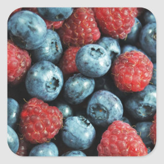 Mixed berries (blueberries and raspberries) design square sticker