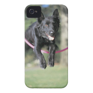 Mixed Border Collie Case-Mate iPhone 4 Cases