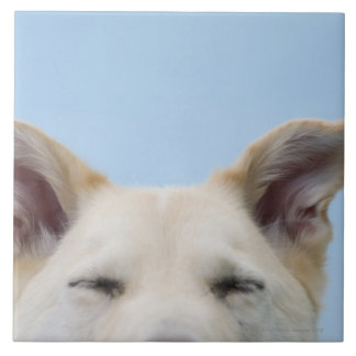 Mixed-breed dog, close-up on head and ears large square tile