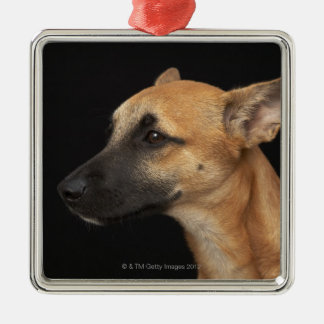 Mixed breed dog looking to the left on black christmas ornament