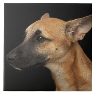 Mixed breed dog looking to the left on black large square tile