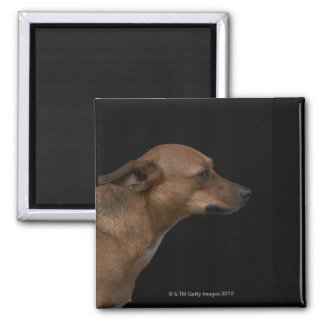 Mixed breed dog profile on black background square magnet