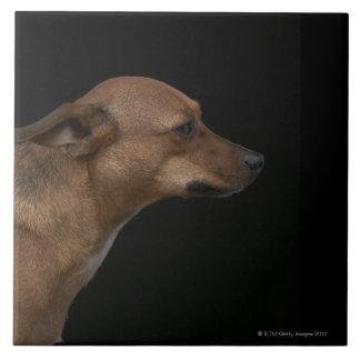 Mixed breed dog profile on black background ceramic tile