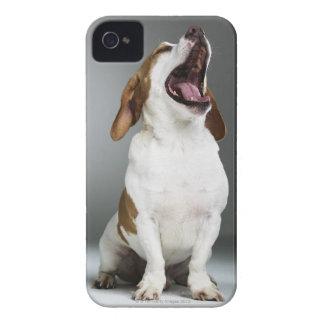 Mixed breed dog yawning, close-up iPhone 4 case