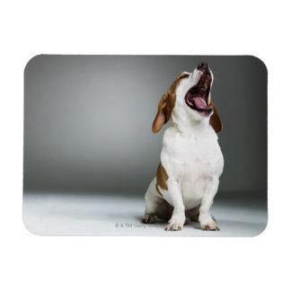 Mixed breed dog yawning, close-up magnet