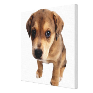 Mixed-Breed Puppy Gallery Wrapped Canvas