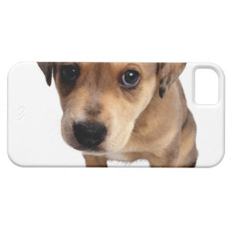 Mixed-Breed Puppy iPhone 5 Cover