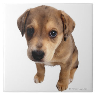 Mixed-Breed Puppy Large Square Tile