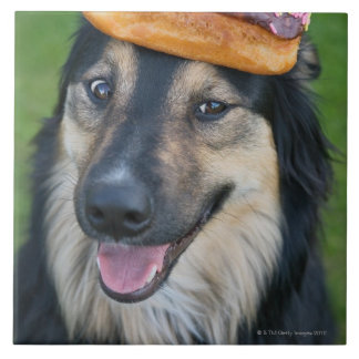 Mixed breed shepherd with donut on head tile